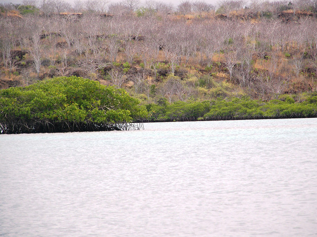 Prospective biomonitor and sentinel bivalve species in mangrove-lined Nicaraguan coasts