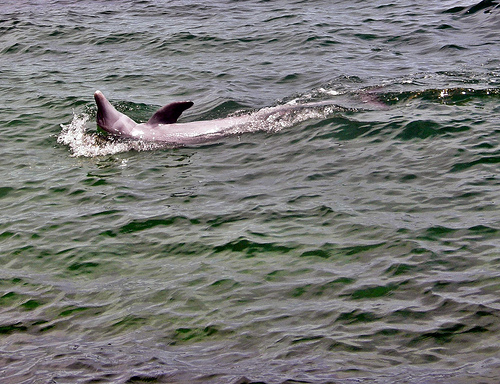 Trivia # 292: pyrethroids in dolphins